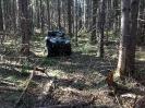 Природа лес _1